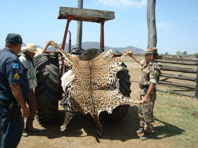 Emerson disse que ganhava R$ 1 mil para cada animal abatido. (Foto: divulgação)