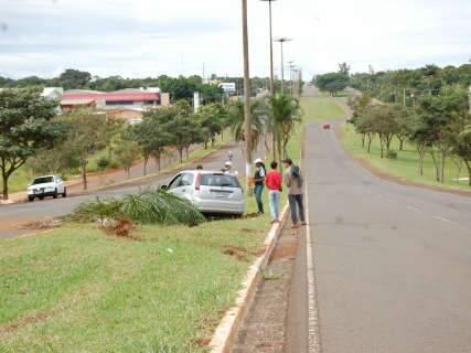 Condutor se assusta com araras, perde controle e derruba duas palmeiras