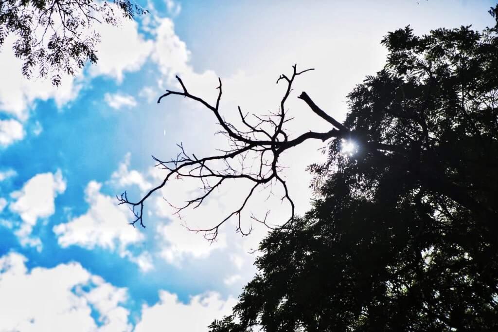 Sol divide céu com nuvens nesta tarde no Jardim dos Estados (Foto: Fernando Antunes)
