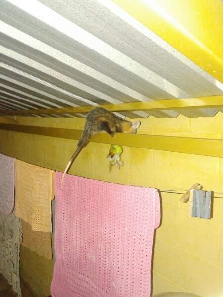 Gamba encontrado na varanda do residencial. (Foto: Direto das ruas)