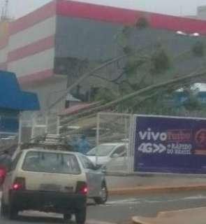 Ventos de até 30 km/h derrubam árvores, mas trazem pouca chuva