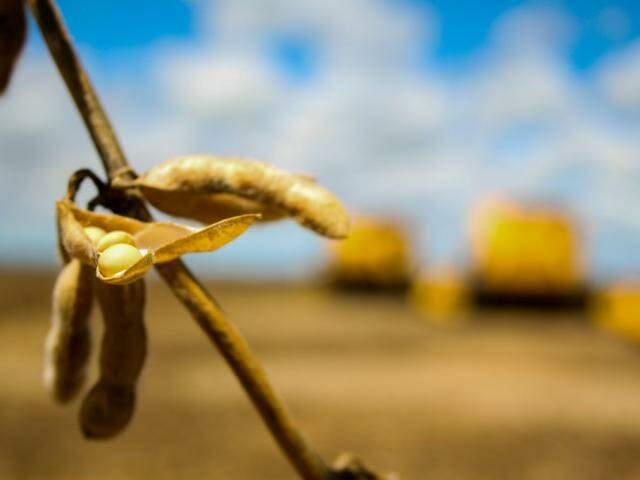 Produtor rural pode renegociar dívida; acima, colheita de soja em MS (Foto: Marcos Ermínio)