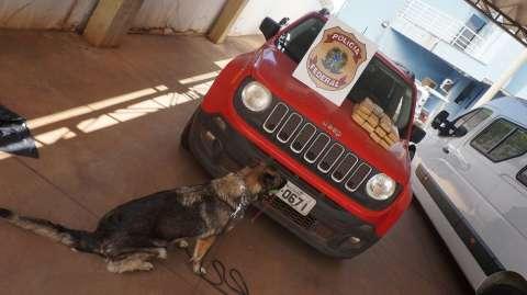 Droga em carro usado por filho de magistrada foi achada em treino de cães