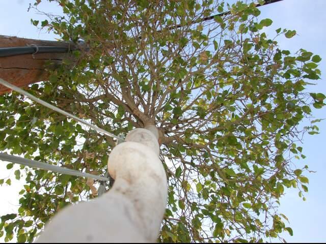 Plano municipal aumenta recursos para proteger árvores. (Foto: Simão Nogueira)