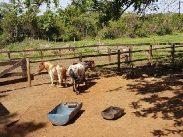 Pôneis encontrados em haras estavam sem comida e água, segundo a polícia. (Foto: Direto das Ruas)
