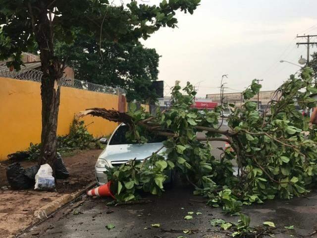 Galho de árvore caído em veículo após chuva vir acompanhada de ventos de 50km/h, na Capital (Foto: Liniker Ribeiro)