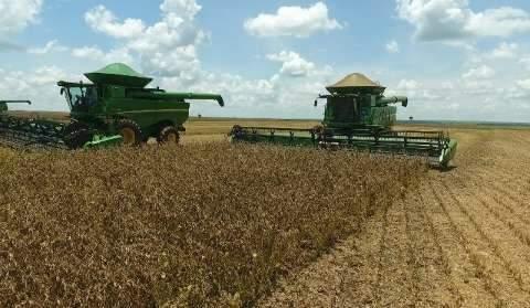 Com chuva, só 5,4% da soja de MS foram colhidos até agora no Estado