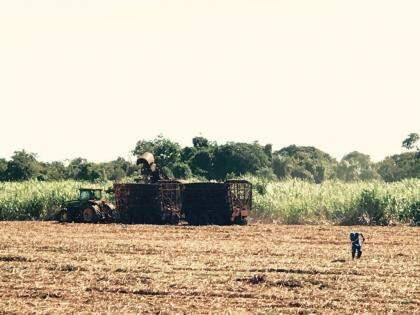 Colheita de cana, produto que também se destaca nas vendas, devido ao desempenho do açúcar (Foto: Lucimar Couto)