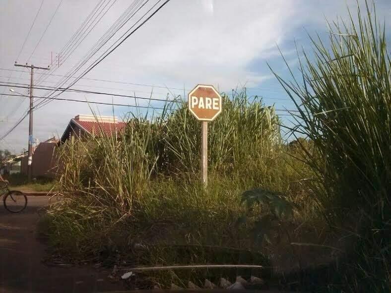 Mato em terreno baldio dificulta visualização de placa de sinalização (Foto: Gilsienny A. Munhoz)