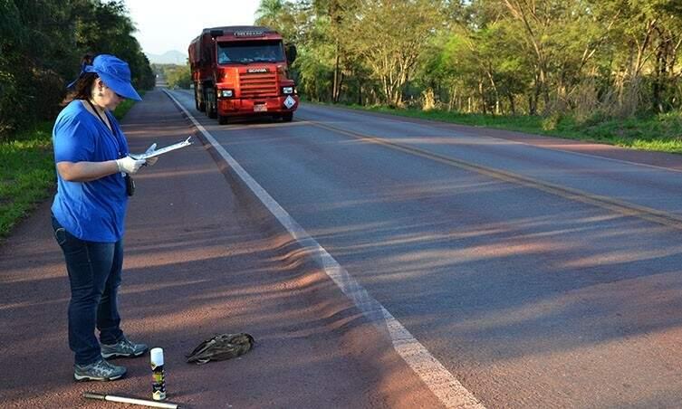 Equipe percorre rodovia uma vez por semana para catalogar registros de atropelamento e recolher animais mortos. (Foto: Divulgação/ITTI)