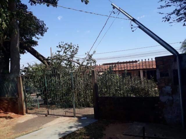 Parte da árvore caiu sobre portão e padrão de luz de residências (Foto: Direto das Ruas)