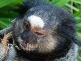 Estudante resgata macaco em rua de bairro próxima a incêndio florestal
