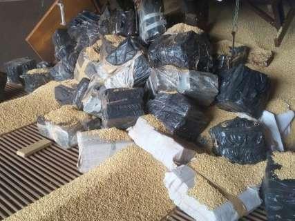 Mais de 1 tonelada de maconha é encontrada escondida em carga de soja