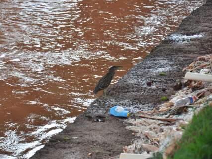 "Depois de chuvas, Córrego Prosa exibe ""cicatrizes"" e problemas antigos"