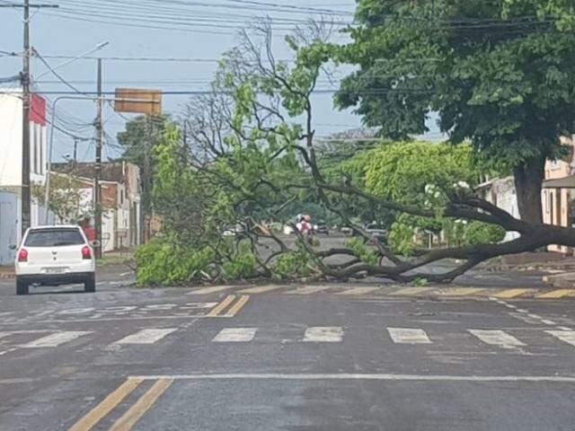 Árvore caída na Rua Avenidas Albert Sabin. (Foto: Direto das Ruas)