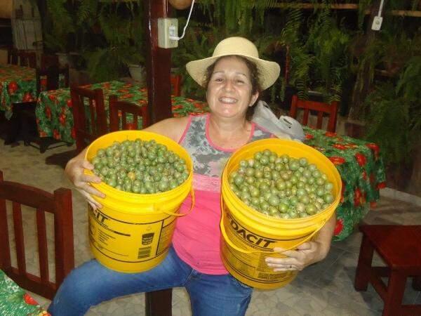 O fim de ano marca o período das aventuras da Cidinha em busca das guviras. (Foto: Reprodução Facebook)