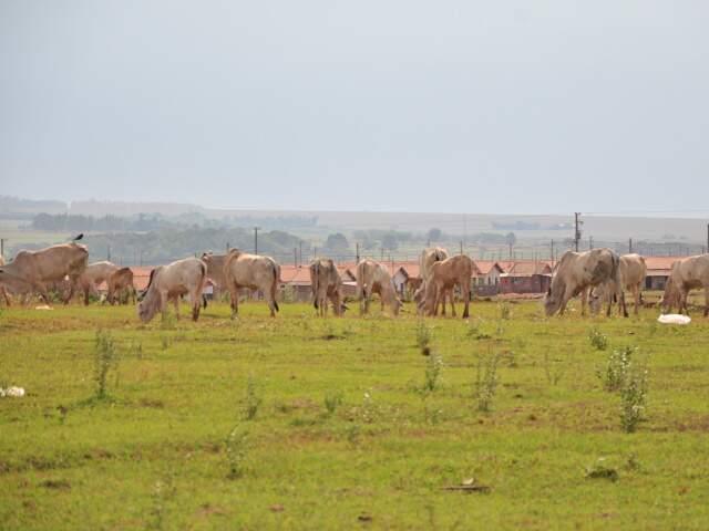 Facilidade do trânsito de animais na fronteira foi motivo de preocupação. (Foto: João Garrigó)