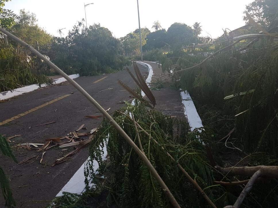 Na tarde desta quarta-feira (20), caules e folhas podados ainda estavam no meio da pista de caminhada e às margens da Via Morena. (Foto: Anahi Gurgel)