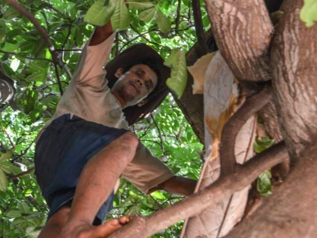 Edson Cassio da Silva subindo na árvore que fez virar sua casa. (Foto: Alana Portela)