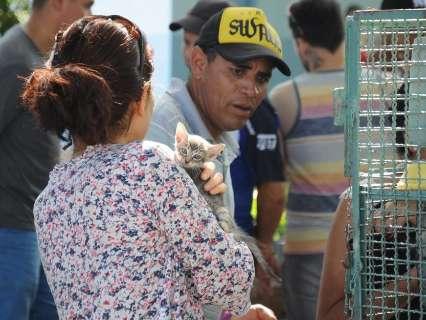 Em feira de adoção, 61 cães e 37 gastos ganham família e novo lar