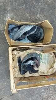 Filhote de tamanduá é encontrado ao lado da mãe morta vítima de atropelamento