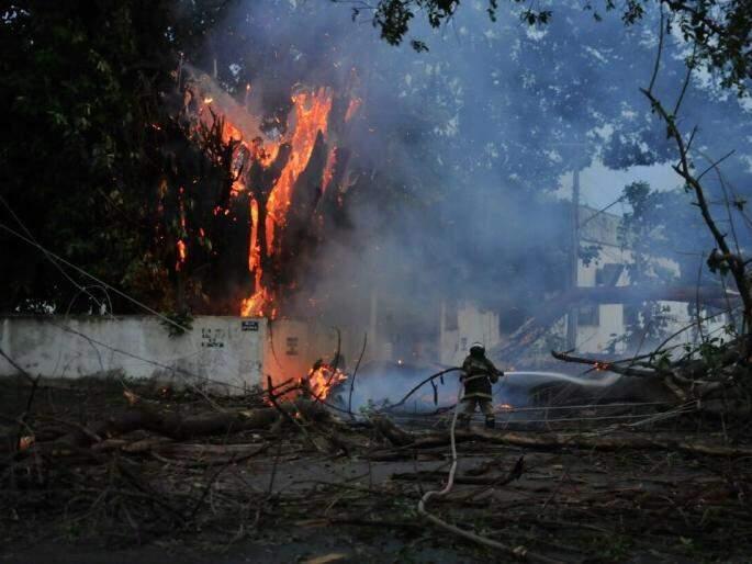 Árvore em chamas na Vila Jacy (Foto: Alcides Neto)