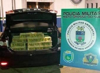 Dupla é multada em R$ 430 mil por traficar 860 canários peruanos