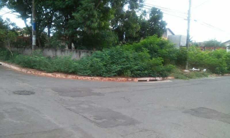 O terreno com mato alto fica no bairro Monte Castelo.(Foto: Direto das ruas)