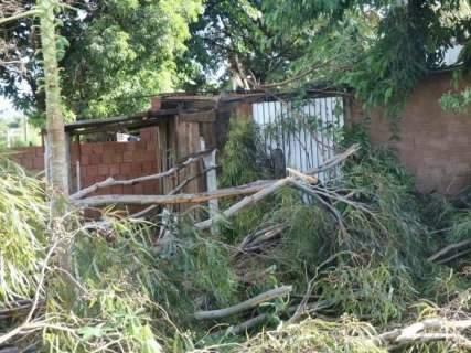 Eucaliptos caem durante chuva, interditam rua e estragam telhado de casa