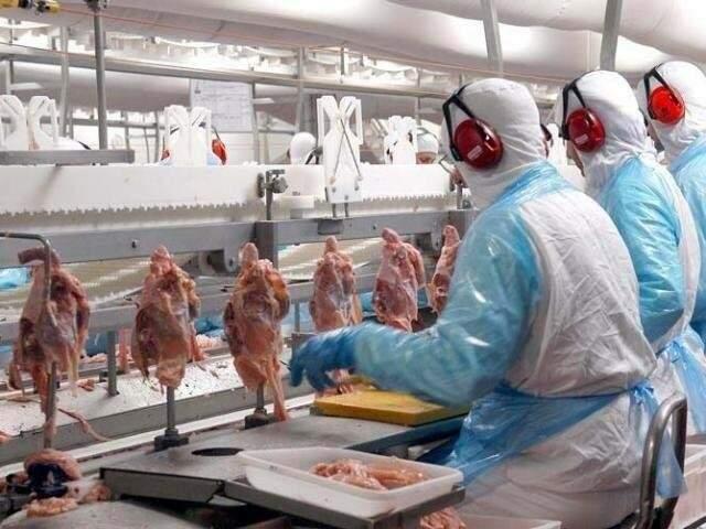 Linha de produção de frangos (Foto: divulgação)