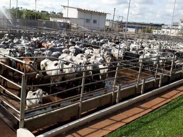 A capacidade de abate diário no frigorifico, era de 500 a 600 bovinos por dia. (Foto: Reprodução)