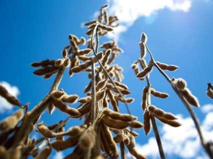 Impulsionada pela soja, exportação de MS soma US$ 4,7 bilhões em 2017