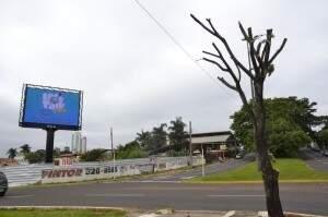 A poda radical foi feita em novembro do ano passado. (Foto: Simão Nogueira)