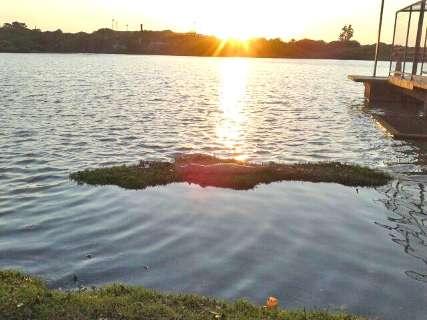 Leitor fotografa jacaré no Lago do Amor logo ao amanhecer