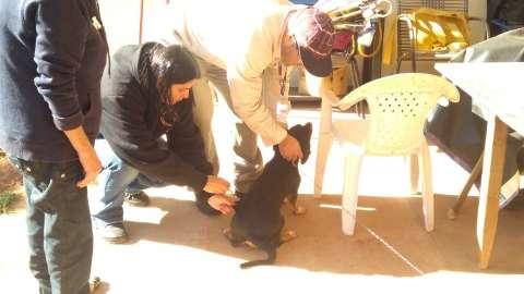 Prefeitura vai vacinar 700 cães contra leishmaniose até quinta-feira