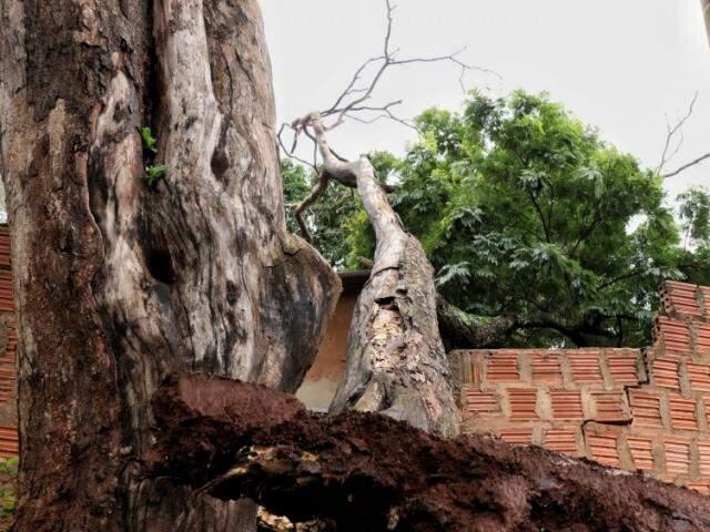 Parte do tronco atingiu muro, parede e telhado da casa (Foto: Henrique Kawaminami)
