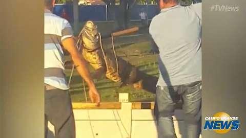 Técnicos da Embrapa iniciam transferência de jacarés em lagoa urbana