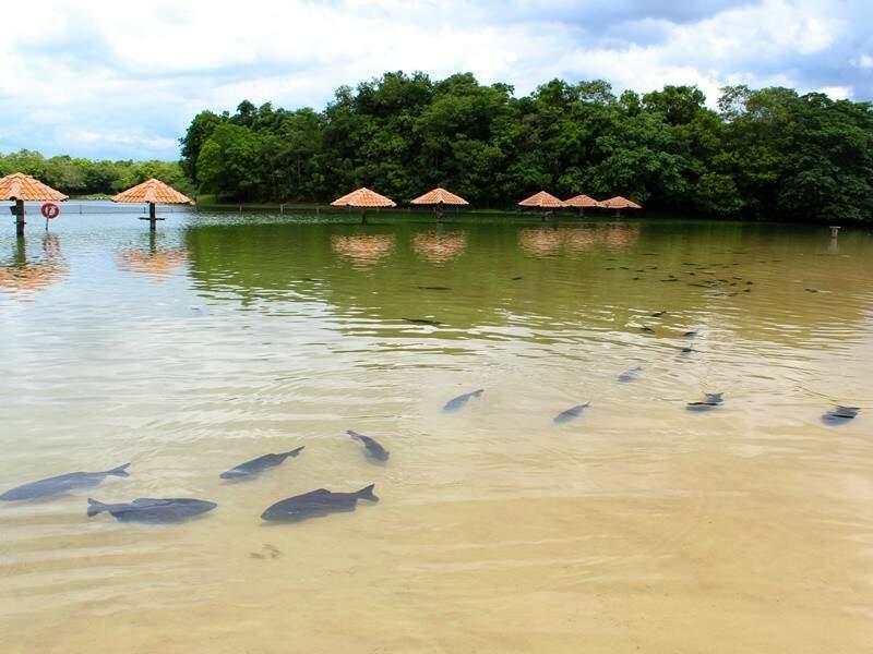 Na Praia da Figueira você tem a chance de nadar entre os peixes. O passeio vale a pena (Foto: Reprodução)