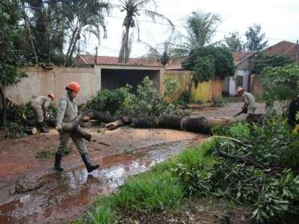Em menos de um mês, duas árvores caem na mesma rua em bairro da Capital
