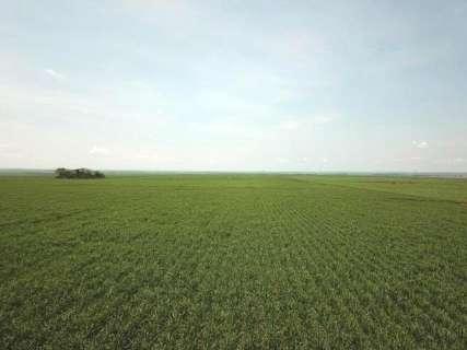 Bolsonaro revoga decreto e libera plantio de cana-de-açúcar no Pantanal