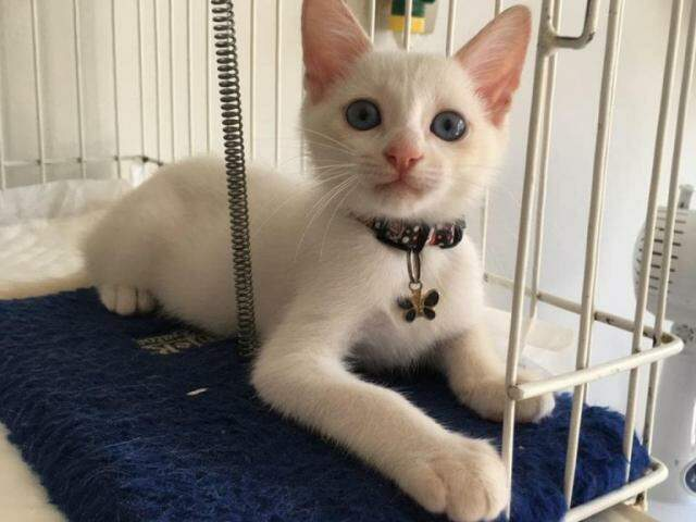 Tapioca tem apenas quatro meses e foi adotado por médica veterinária. (Foto: Direto das Ruas)