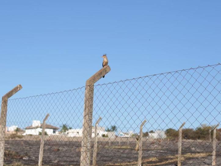 Anu descansa em poste, perto de área atingida por incêndio nesta manhã (18), em Campo Grande. (Foto: Fernando Antunes)