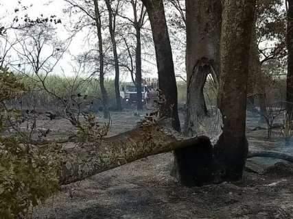 Do alto, drone mostra estragos de grande incêndio em canavial