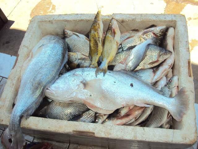 Peixes apreendidos foram doados a instituições filantrópicas, diz PMA (Foto: divulgação)