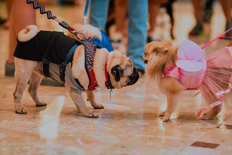 Durante o passeio os doguinhos vão conhecer outros amiguinhos de quatro patas e fazer novas amizades. (Foto: Divulgação/Shopping Campo Grande)