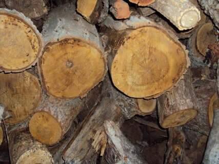 Exploração de madeira gera multa de R$ 1 milhão em Bataguassu