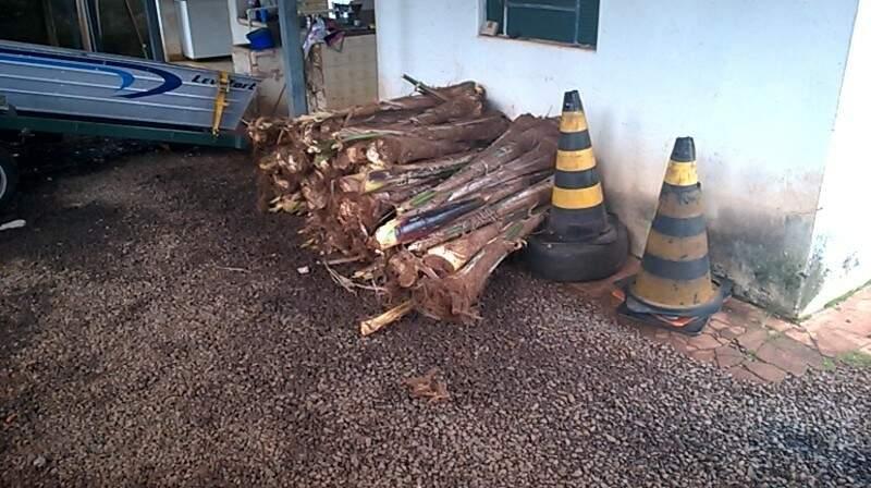 Palmito foi doado a entidades de assistência social da cidade (Foto: Divulgação/PMA)
