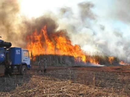 MS teve só ontem 92 incêndios florestais, número recorde em 2011