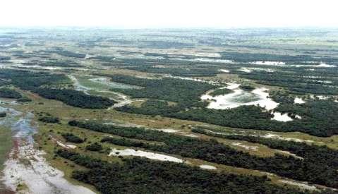"""Bacia do Rio Paraná em MS também tem o seu """"Pantanal"""""""