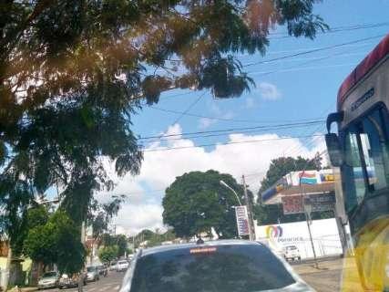 Galhos de árvores encobrem semáforo no Centro, denuncia motorista